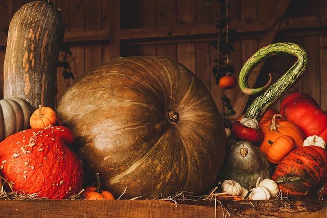 Pumpkins & Hoses